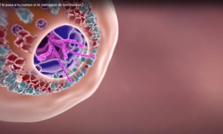 ¿Qué le pasa a tu cuerpo si te contagias de coronavirus?