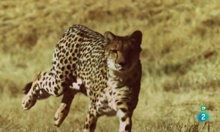 Supervivencia extrema: animales sociales (abejas, lobos, leones, hormigas, babuinos…)