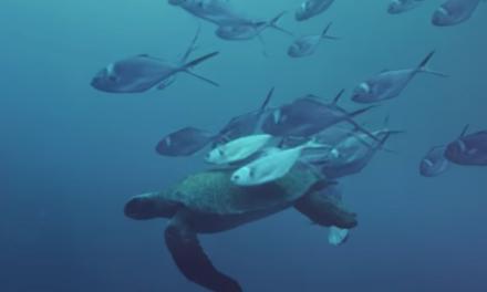 Las Islas Galápagos | Trailer | Nat Geo