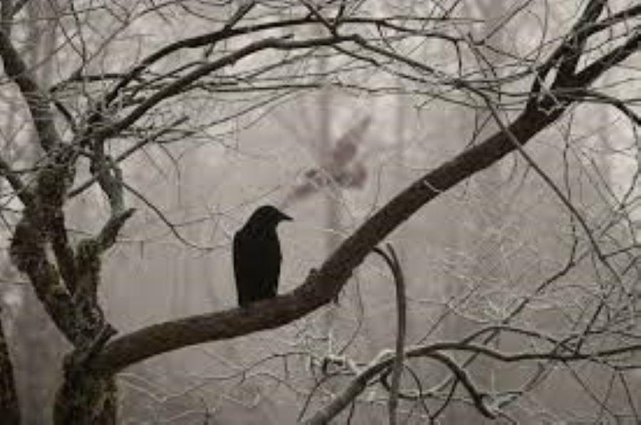El Cuervo / Edgar Allan Poe