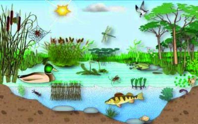 Los factores del ecosistema