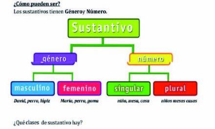 El género y número de los sustantivos